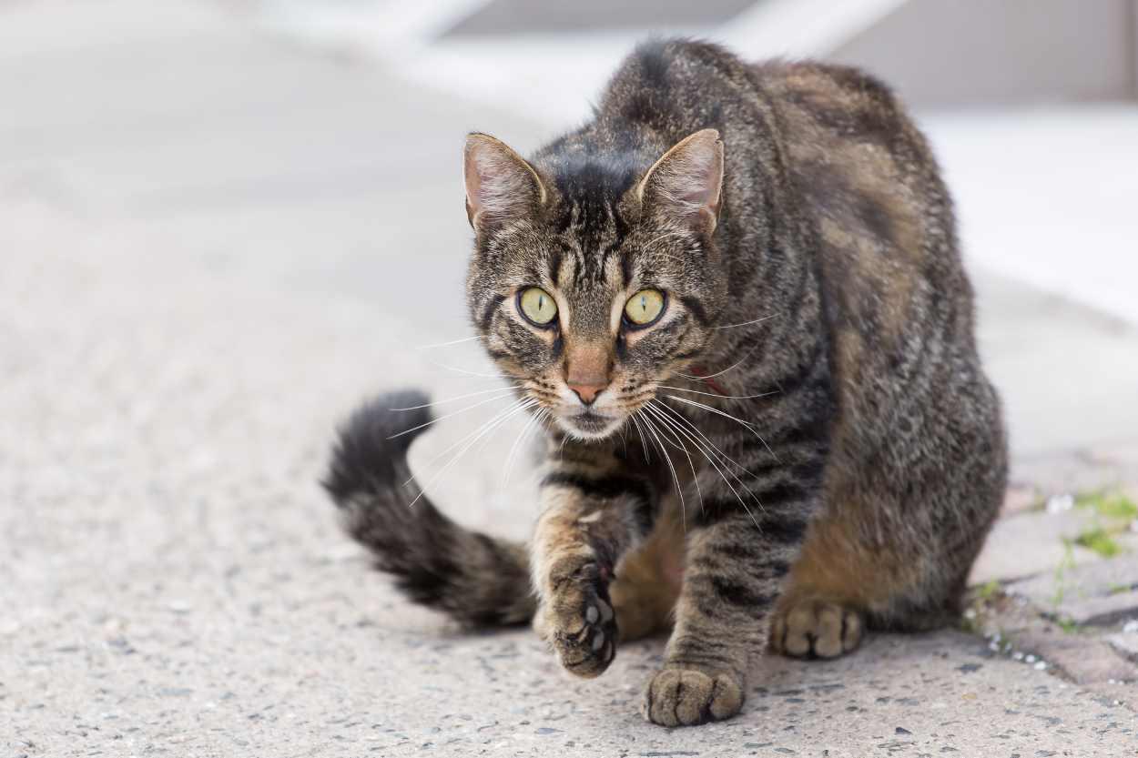 Eine Katze, die wir während des Spaziergangs durch Leipzig Lindenau mit Bertram Weisshaar sahen.