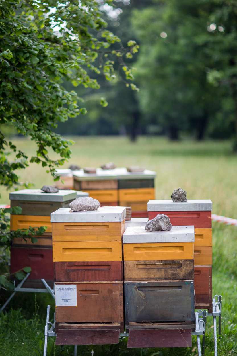 Bienenstöcke von Christopher Mann im Leipziger Clara-Zetkin-Park.