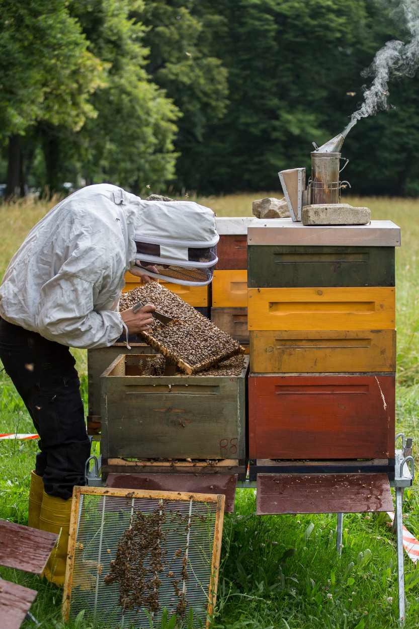 Christopher Mann kontrolleirt das Verhalten seiner Bienen.