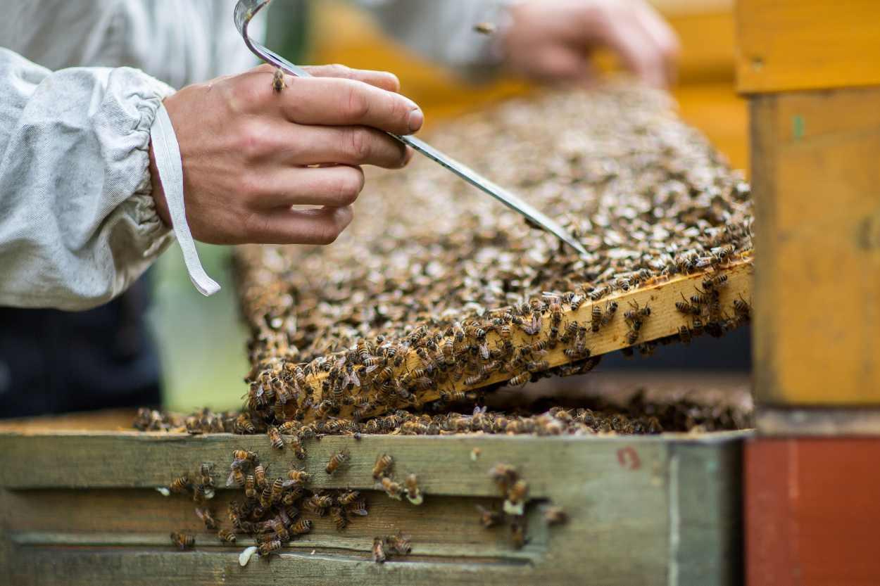 Christopher Mann kontrolliert den Zustand der Bienen.