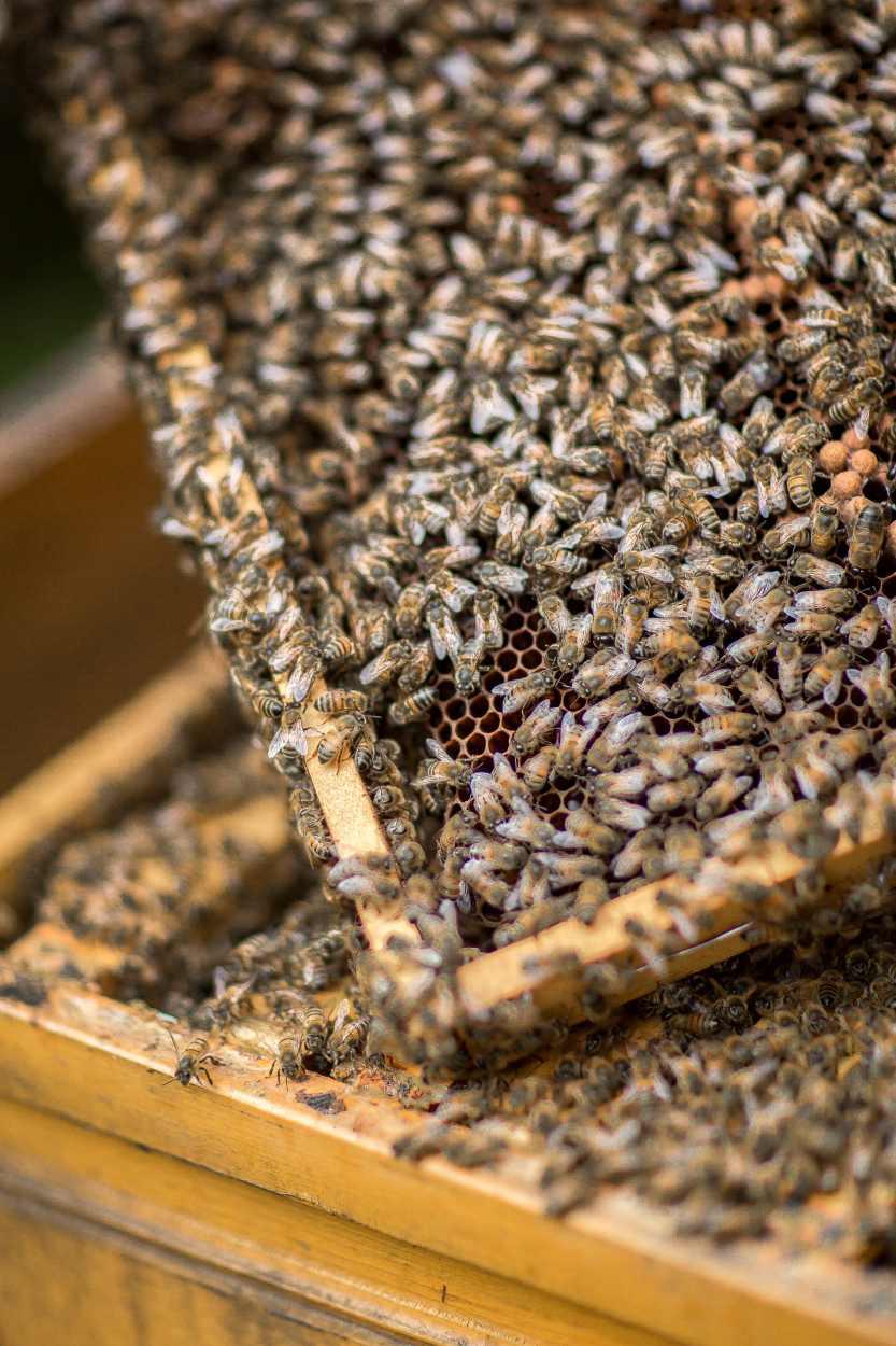 Detailaufnahme einer Bienenwabe.