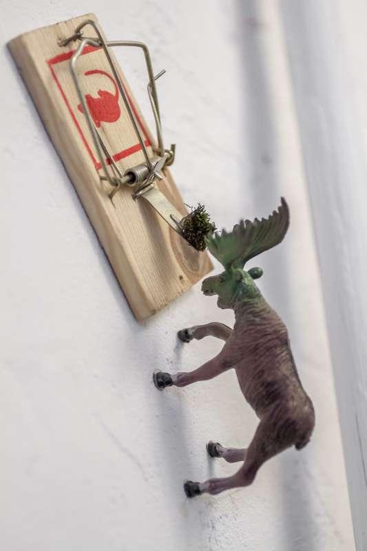 Eine Plastikfigur eines Elches hat sich mit seinem Geweih in eine Mausefalle verirrt.