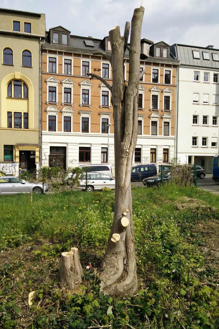 Blick auf das geräumte Gelände der Nachbarschaftsgärten Leipzig Lindenau.