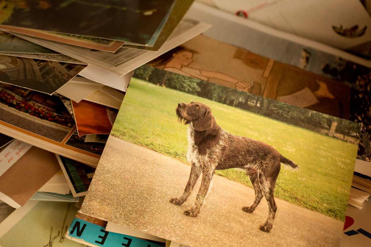 Das Bild eines Hundes auf einem Stapel von Postkarten.