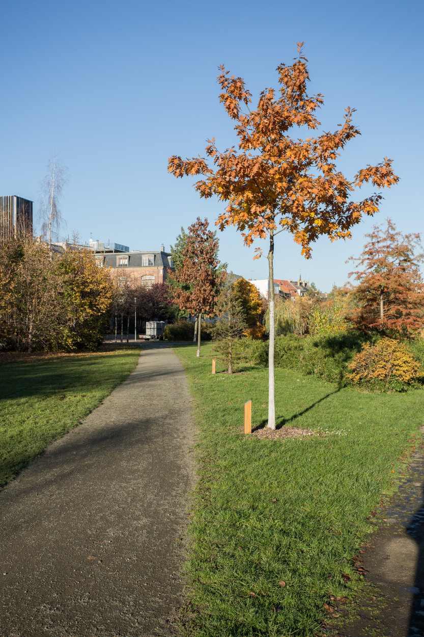 Henriettenpark im Herbst 2015