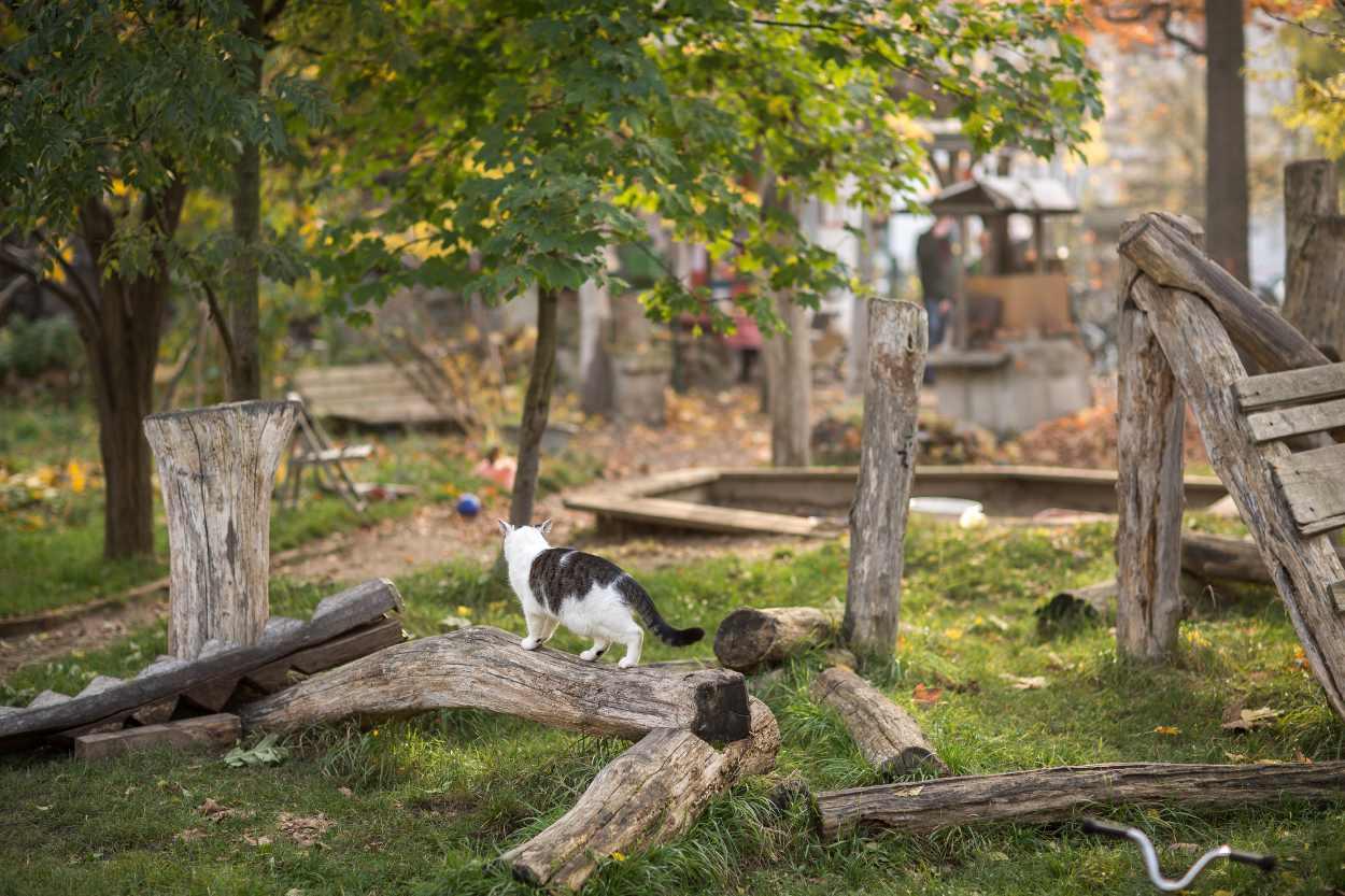 Eine Katze streunt durch die Nachbarschaftsgärten in Leipzig Lindenau.