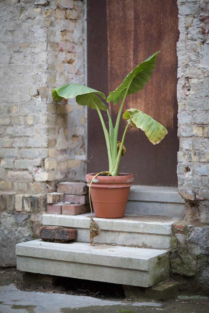 Eine Topfpflanze steht vor einer Haustür auf dem Gelände des zu sanierenden Areals in der Josephstraße.