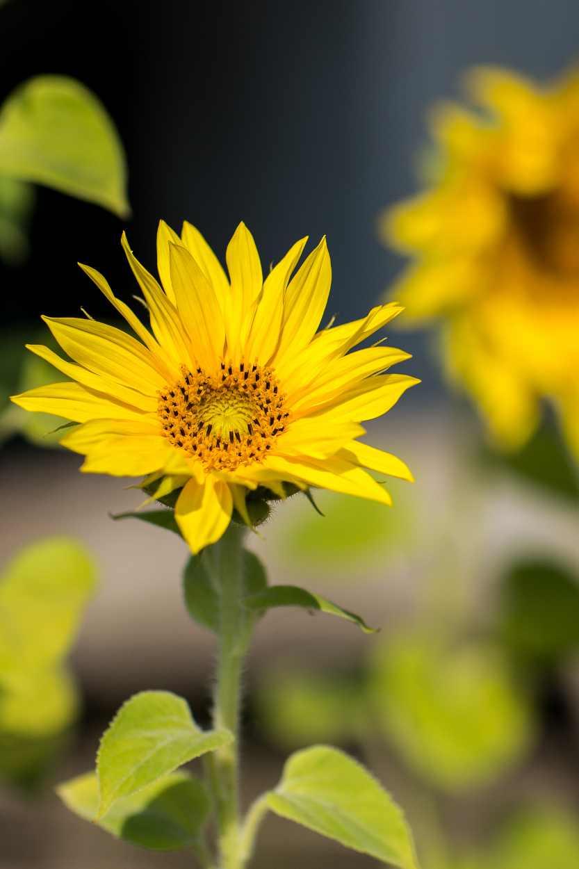 Blühende Blumen im Kleingarten von Steffi Geschewski.