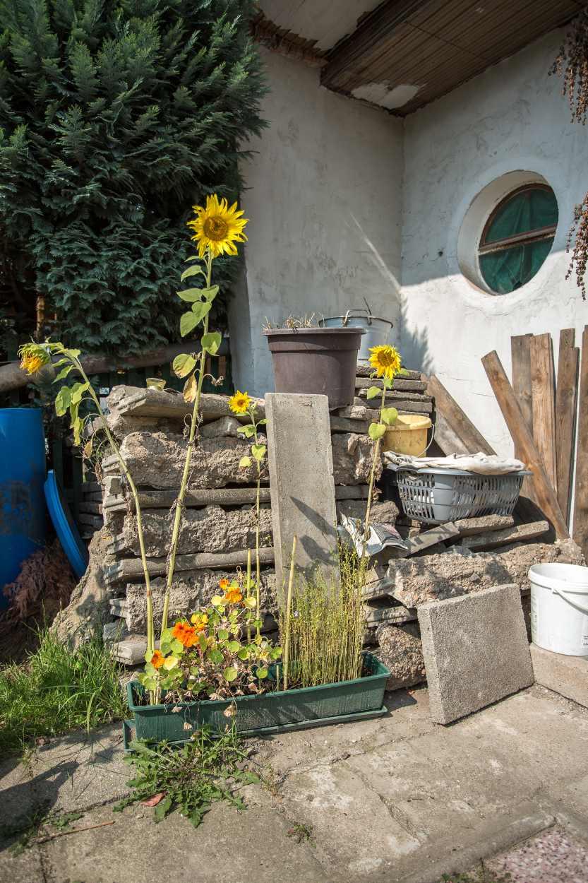 Hinter Sonneblumen lagern herausgerissene Bodenplatten, die vom Vorbesitzer verlegt wurden.